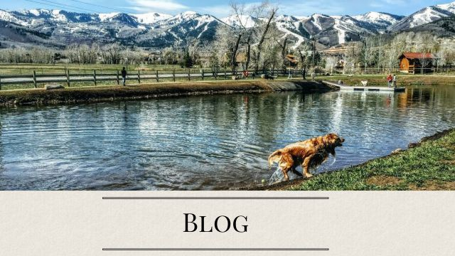 Blog-Real-Estate-In-Park-City